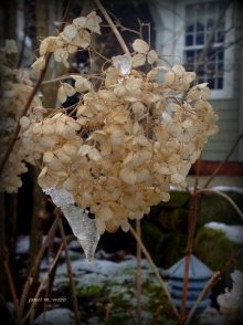 flowers-with-ice-janet-webb-2